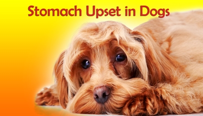 Stomach Upset in Dogs