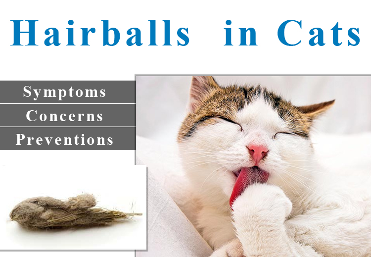 Cat Hairball Avoidance Tips