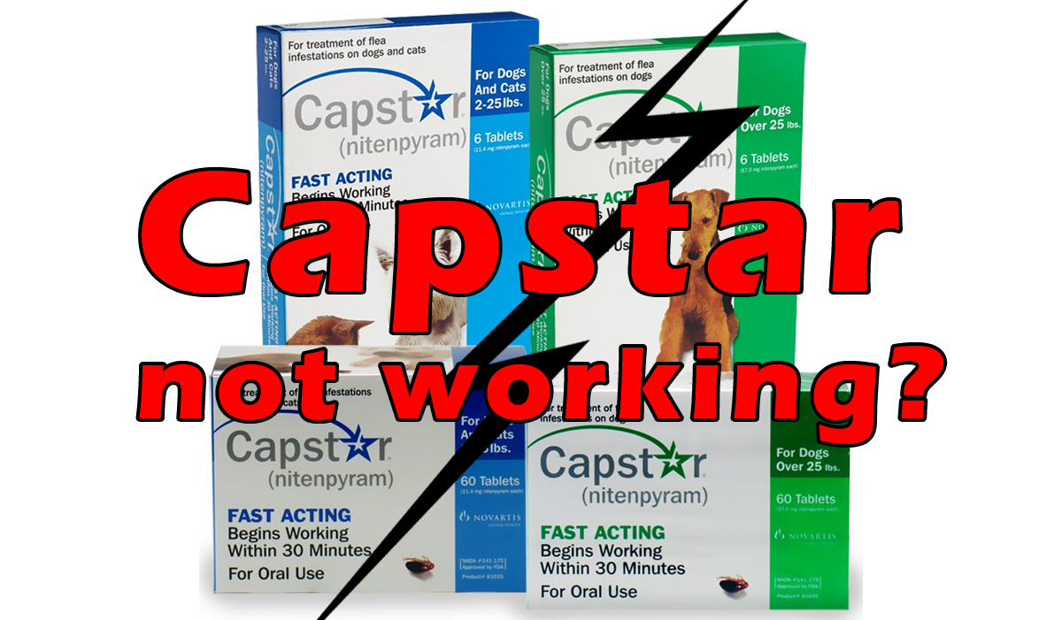 capstar not working good