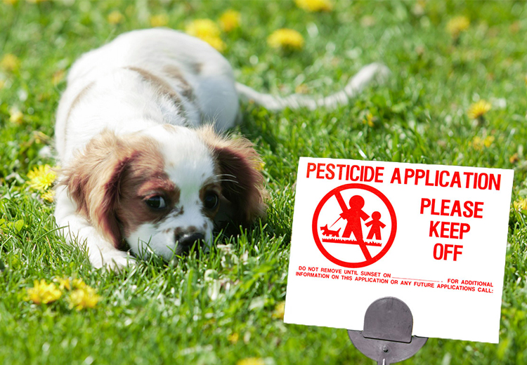 Pets & Lawn Pesticides – How Pets are Prone to Chemical Toxicity