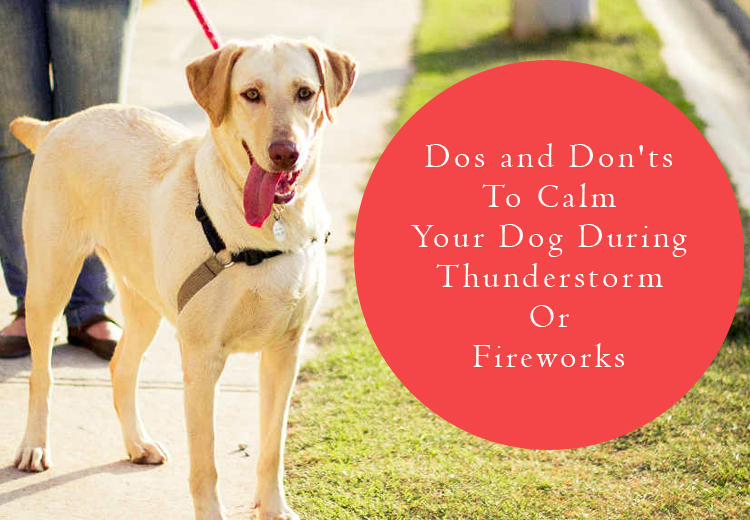 Dos and donts to calm your dog