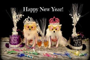 Celebrate New Year with Your Pets