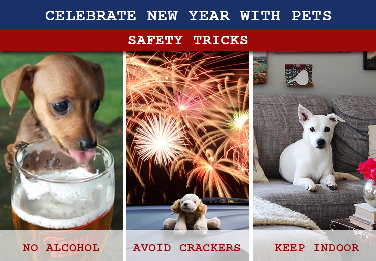 Keep Pets Safe on New Year's Eve