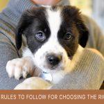 news pets checklist