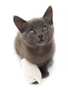 cat wound care treatment
