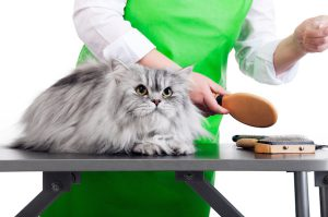 Brush Pets On Regular Basis