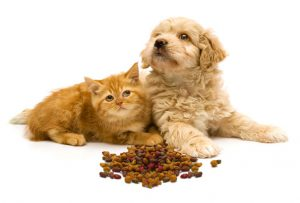 High Protein Food for Pets