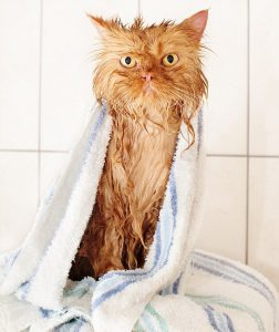 Keeping Cat Dry
