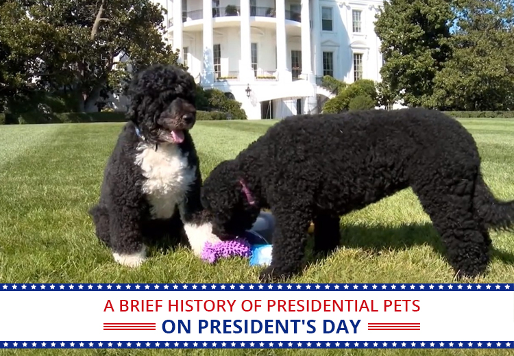 History Of Presidential Pets On President's Day