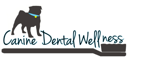 Pet Dental Wellness Treatment