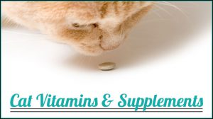 Add Supplements in Cat's Diet