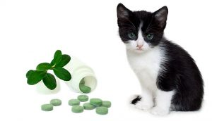 Avoid Steroids and Antibiotics for Cats