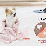 Flea and Tick