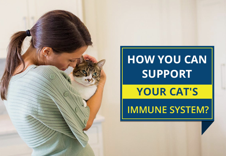 How You Can Support Your Cat's Immune System