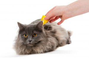 Quality Flea and Tick Treatments for Cats