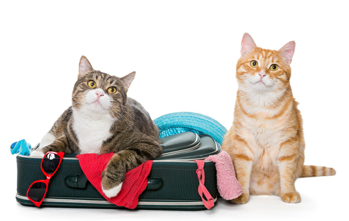 tips for traveling with pets and cats