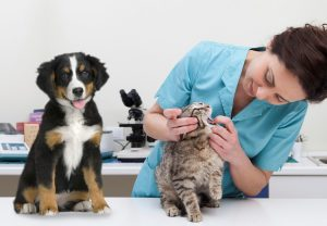 Importance of Dental Care for your dog and cat