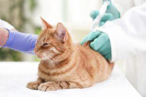 Cat Vaccine