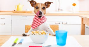 Oral Health Food for your pet