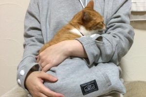 Never Hold The Cat In Your Arms - Pet Care Supplies