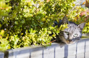 Never Keep Your Feline Wander Or Exposed To Other Pets - Pet Care Supplies