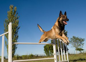 Worried about Stiff Joints of your Doggy? Try These Options Today!!! | Joint Exercise of Dog - PetCareSupplies