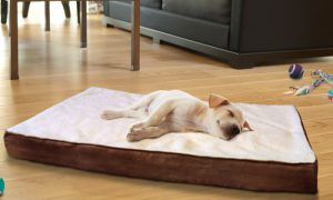 Worried about Stiff Joints of your Doggy? Try These Options Today!!! - Orthopedic Bed for Dog | PetCareSupplies