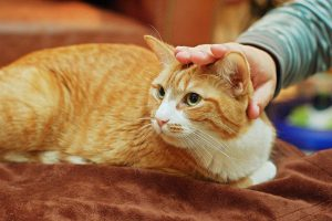Make Your Kitty Get Used to Being Touched & Handled - Pet Care Supplies