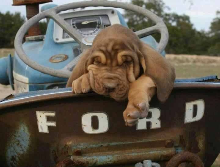 Dog in Rugged Truck - Pet Care Supplies Blog
