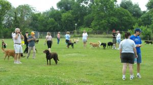 Dog with New People and Pet - Pet Care Supplies Blog