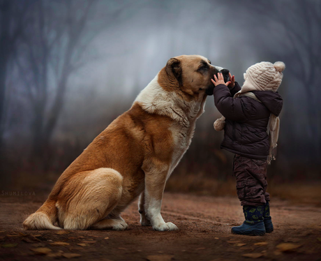 Dog with small boy, Never Take Anyone for Granted- Pet Care Supplies Blog