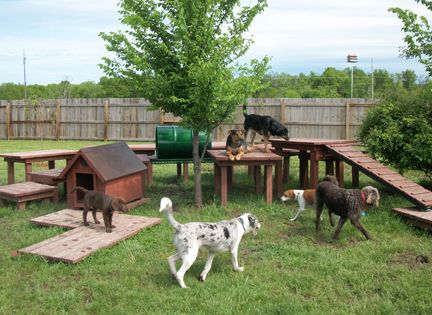 Dog in Backyard - Pet Care Supplies Blog