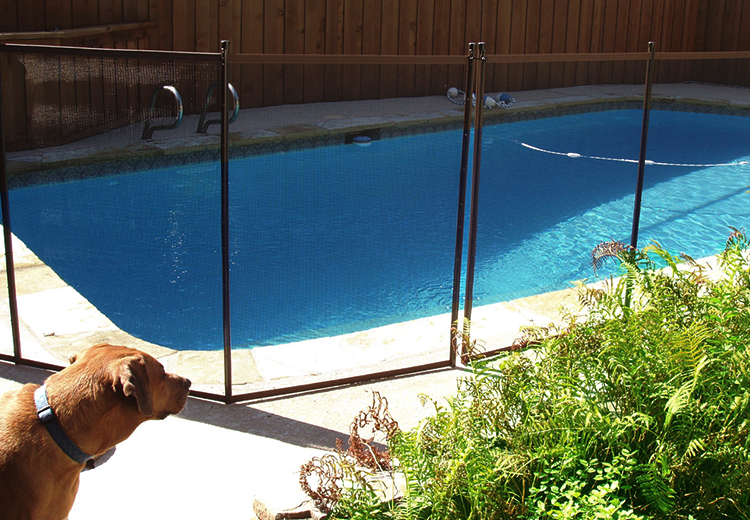 Pet Safety Tips Near Swimming Pool
