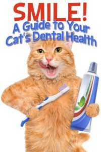 cat dental health tips
