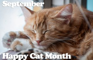 Happy Healthy Cat Month Celebration