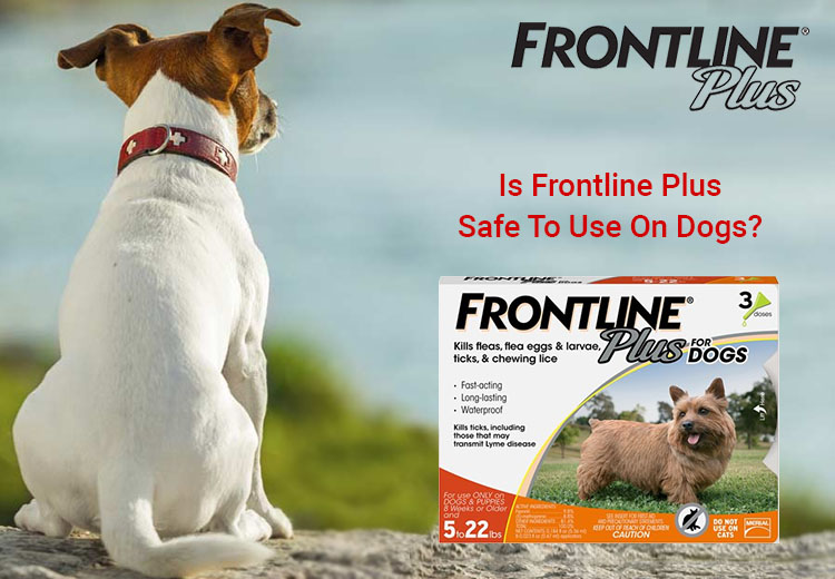 Is Frontline Plus Safe To Use On Dogs?