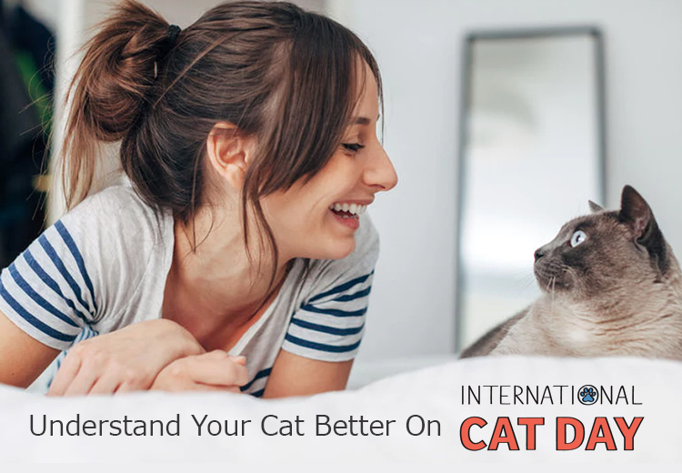 petcaresupplies-international-cat-day