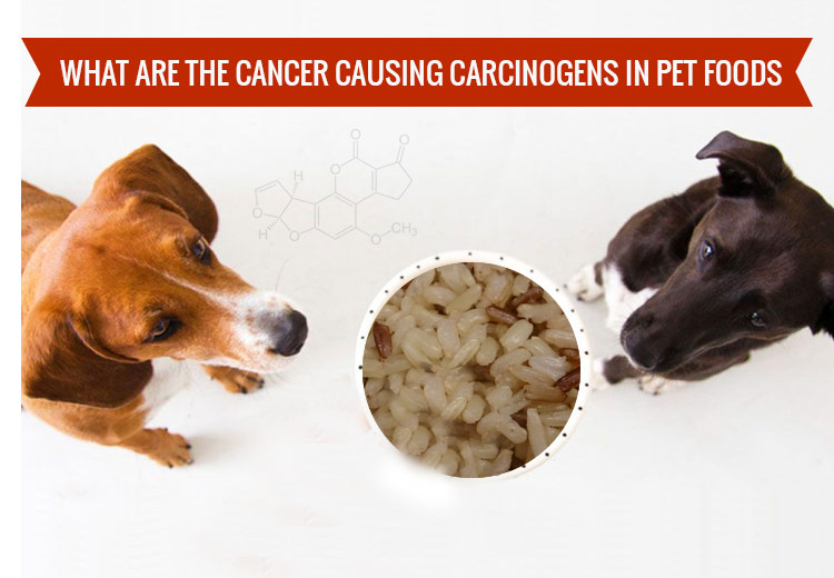 Cancer Causing food for pet
