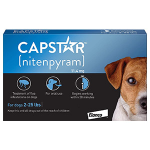 637251062891159988-capstar-dog-blue.jpg