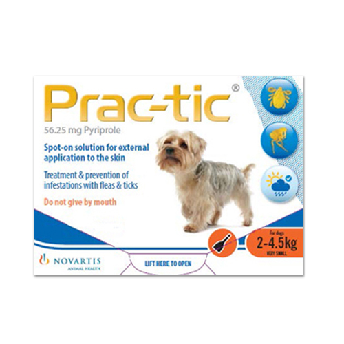 practic-very-small-dog.jpg