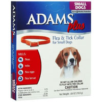 Adam-Plus-Collar-Small-Dogs